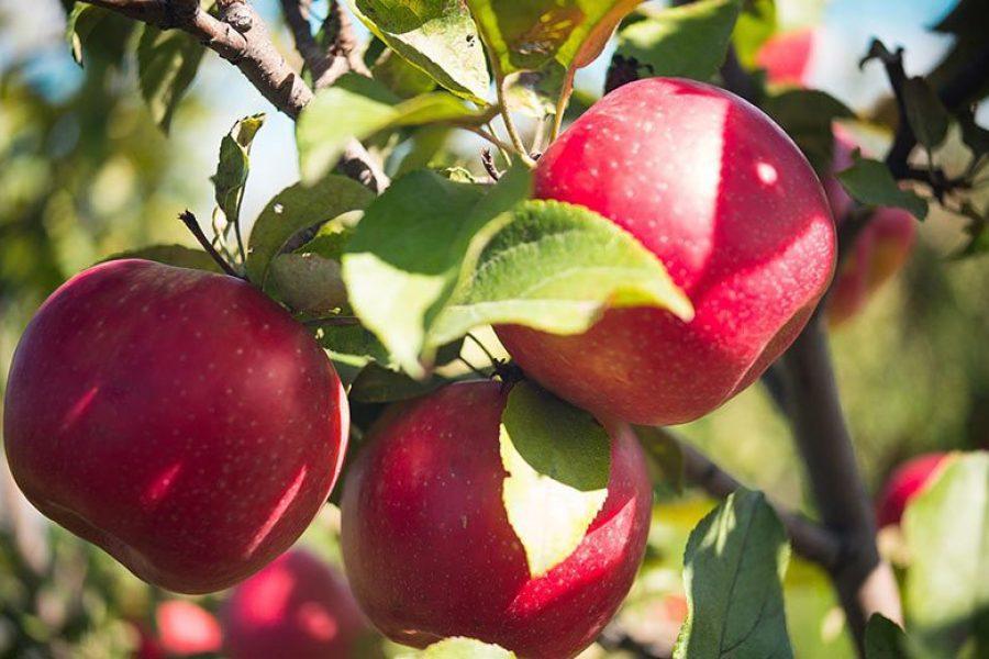 the Orchard at The Peck & Bushel Barn