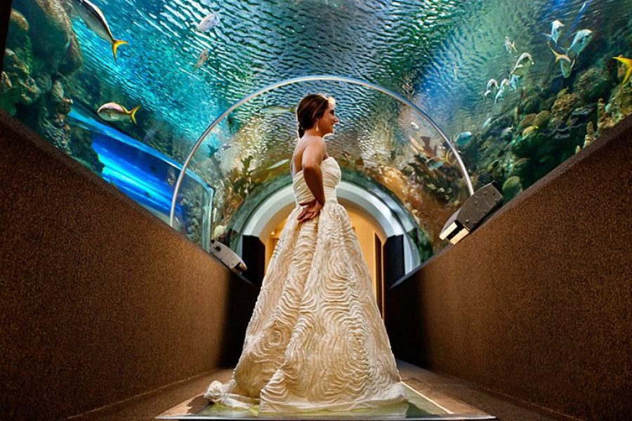 Bride standing under waterway tunnel at Discovery World in Milwaukee, WI