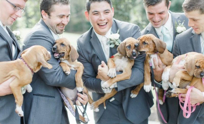Rescue dogs with groom and groomsmen