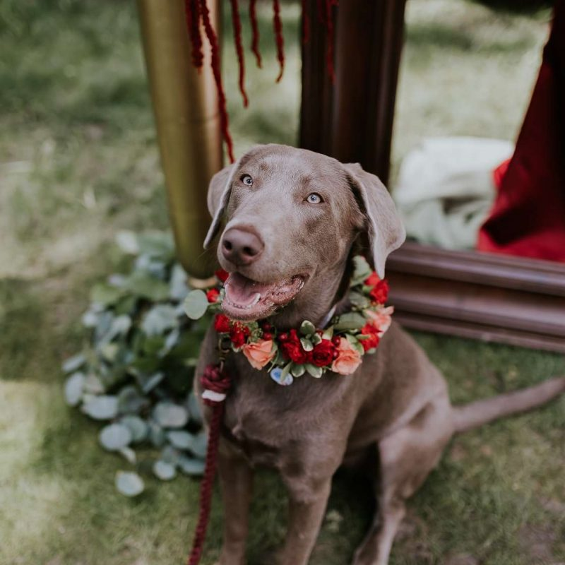 dog-at-wedding-story-hill-firehouse